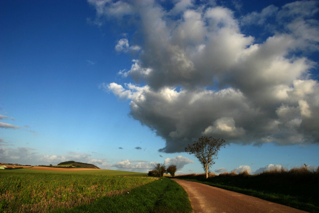 Polní cesta kolem louka, strom, obláčky a nebe